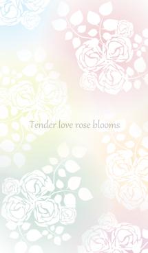 Tender love rose blooms 画像(1)