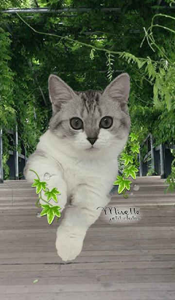 [LINE着せかえ] nature cat ネイチャーねこの画像