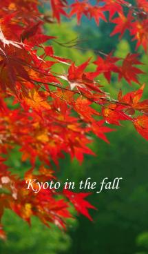 秋の京都 画像(1)