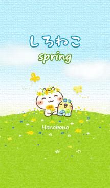 しろねこの春