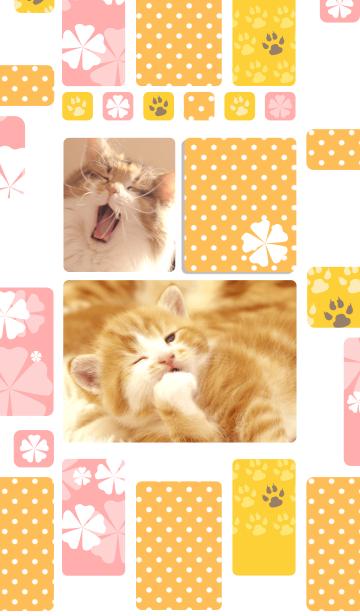 癒し子猫♪あくびにゃんこの画像(表紙)