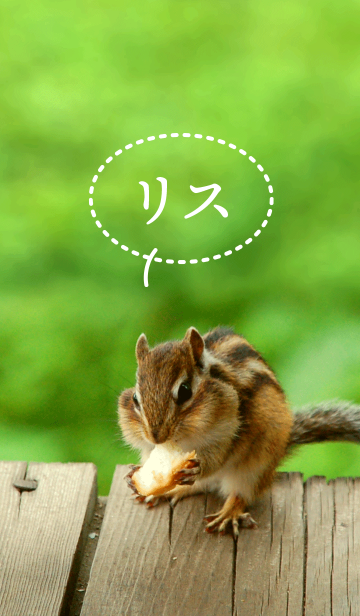 Funny and cute squirrel theme.の画像(表紙)