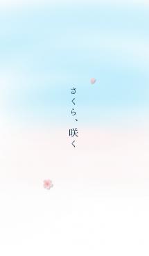 さくら、咲く 画像(1)
