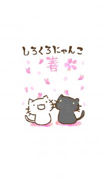 しろくろにゃんこ 春 画像(1)