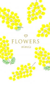 Flowers・ミモザ 画像(1)