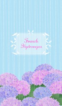 French=Hydrangea 画像(1)