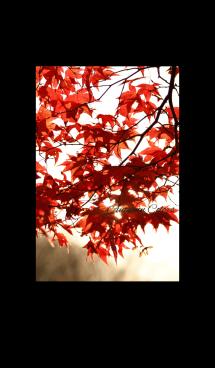 -- Autumn Colors -- 17 画像(1)