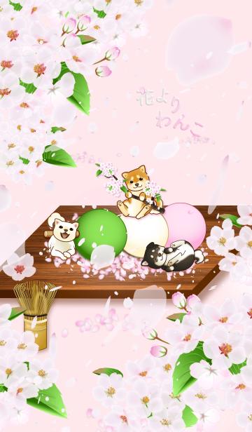 [LINE着せかえ] 花よりわんこ(柴犬、桜吹雪、団子、春)の画像