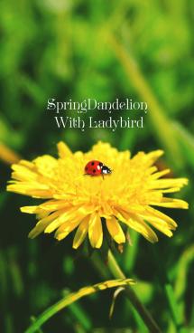 SpringDandelion With Ladybird